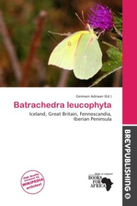 Batrachedra leucophyta