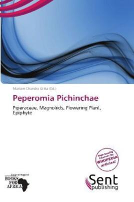 Peperomia Pichinchae