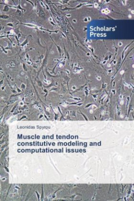 Muscle and tendon constitutive modeling and computational issues